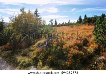 Beautiful colorful autumn landscape with plants and trees in Bohemian Krkonose