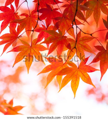 Beautiful Colorful Autumn Leaves - stock photo