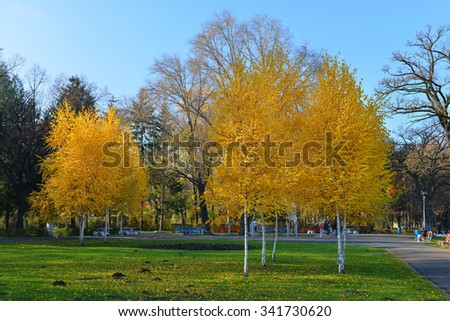Beautiful Colorful Autumn Leaves / green, yellow, orange, red