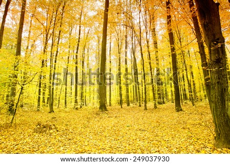 Beautiful colorful autumn leaves in the forest - stock photo