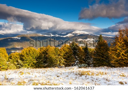 Beautiful colorful autumn leaves in the forest. Overcast blue sky. Carpathian, Ukraine, Europe. Beauty world.