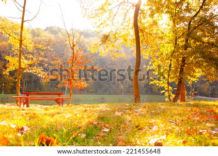 Beautiful Colorful Autumn on the nature, Park in Kiev  - stock photo