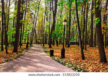 Beautiful colorful autumn park in sunny day, perspective vanishing alley