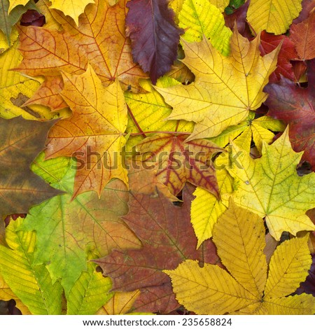 Beautiful colorful background with fallen leaves on the ground. Bright autumn colors. Square image of natural materials. Eco style.  - stock photo