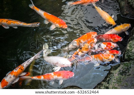 Watering garden stock images royalty free images for Colorful pond fish