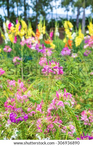 beautiful colorful flower with colorful background