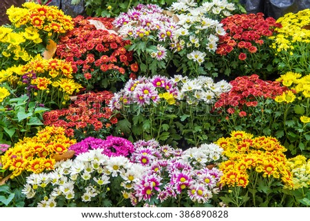 beautiful colorful flowers in garden - stock photo