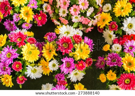 Beautiful colorful gerbera flowers background.