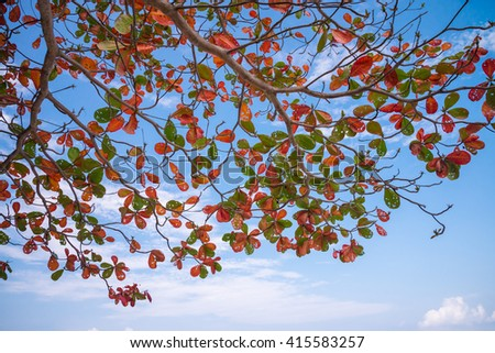 Beautiful colorful leaves against blue sky