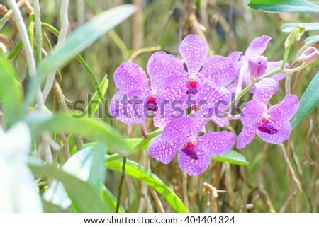 Beautiful colorful orchid flowers closeup.In garden. - stock photo