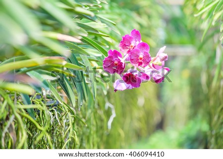 Beautiful colorful orchid flowers closeup.In garden.Select Focus - stock photo