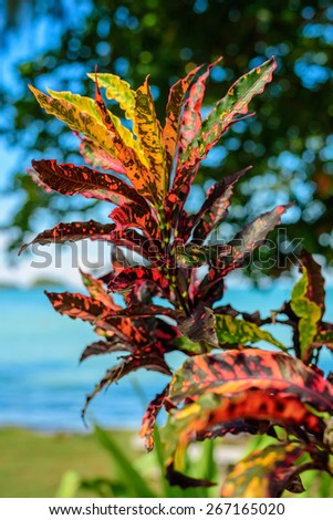 beautiful colorful rainbow leaf and flower on a background of the azure sea and clear blue sky, tropical exotic plant - stock photo