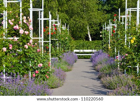 Beautiful colorful rose flowers in sunny summer park . - stock photo