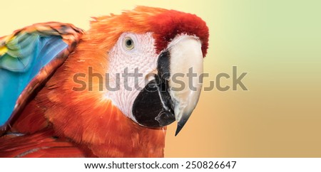 Beautiful colorful scarlet macaw (Ara macao) with a harmonic background