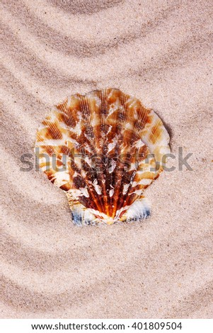 Beautiful colorful seashell on wavy sand background. Close-up. - stock photo