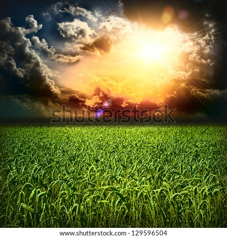 Beautiful colorful sunset over green wheat field - stock photo