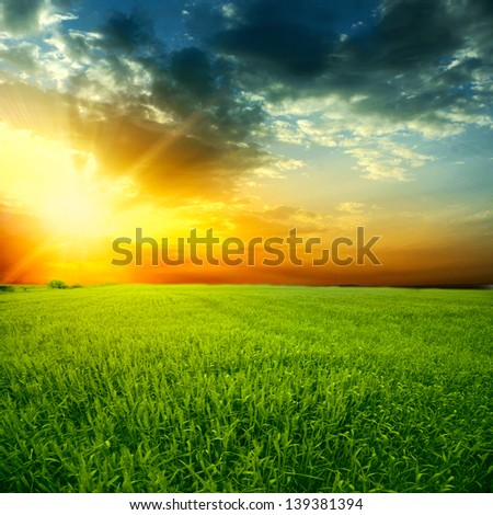 Beautiful colorful sunset over the wheat field - stock photo