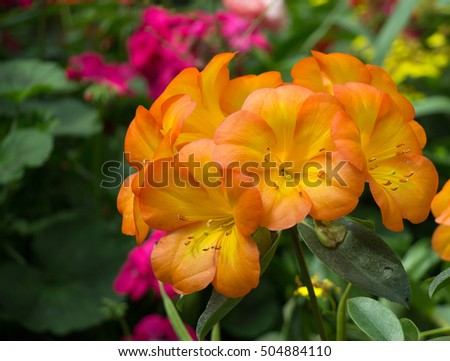 Beautiful colorful winter Flowers