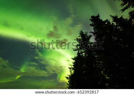 Beautiful colors of the Northern Lights (Aurora Borealis) behind a silhouetted treeline in Alberta, Canada