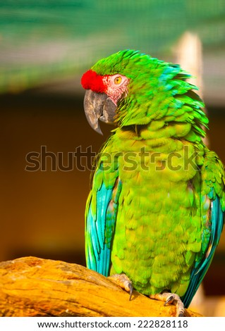 beautiful colourful parrot (macaw) sitting on his branch - stock photo