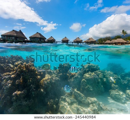Beautiful coral garden under over the water bungalows in French Polynesia - stock photo