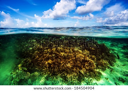 Beautiful coral garden underwater, diving on Maldives, blue cloudy sky, turquoise water, luxury summer vacation, beauty of wild nature - stock photo