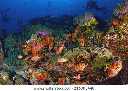 Beautiful Coral in Koh Tao, Thailand - stock photo