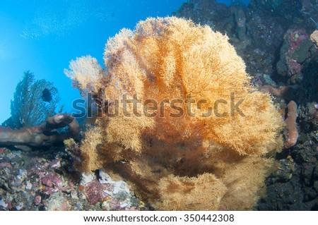 Beautiful coral reef - stock photo