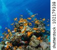 beautiful coral reef full of colorful fish - stock photo
