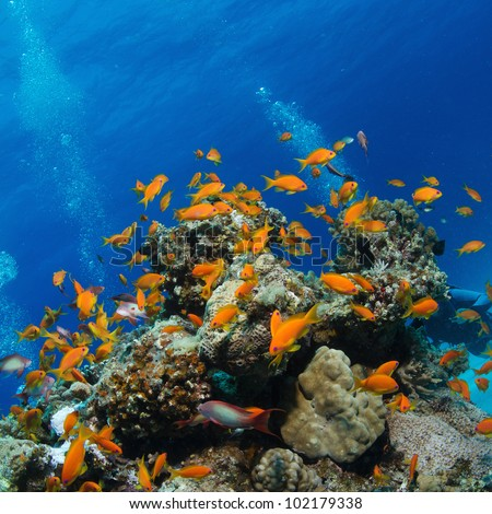 beautiful coral reef full of colorful fish