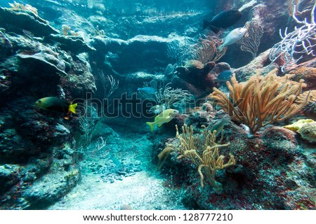 Beautiful coral reef in caribbean sea, Mexico - stock photo