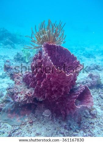 Beautiful coral reef in tropical underwater. Borneo, Malaysia. - stock photo