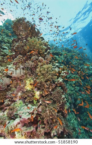 Beautiful coral reef scene with fish life - stock photo