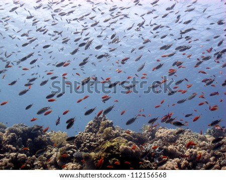 Beautiful coral  reef with million of fishes in the sun light