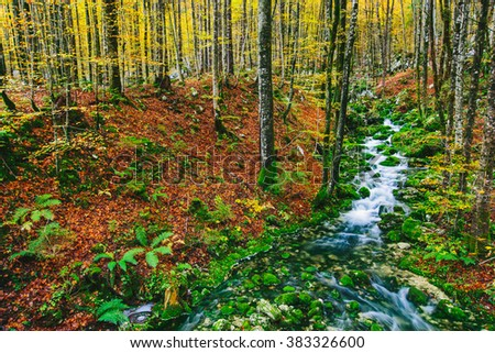 Beautiful creek in colorful autumnal forest near Bohinj lake Slovenia, Europe. Triglav national park. - stock photo