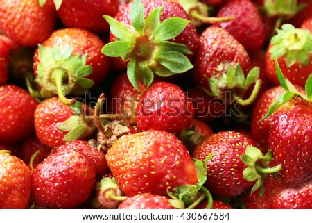 beautiful crop of garden sweet ripe strawberries