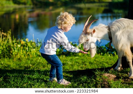 Beautiful curly blond child feeding white goat near the lake in the park - stock photo