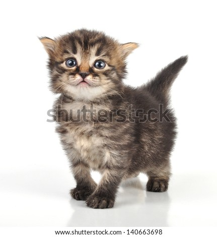 beautiful cute 20 days old small kitten standing - stock photo