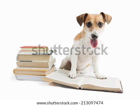 Beautiful cute dog studying reading a lot of books the library on a white background. back to school