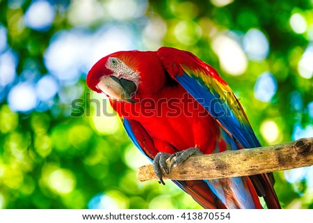 Beautiful cute funny bird of red feathered ara parrot outdoor on green natural background - stock photo