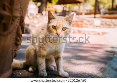 Beautiful Cute Red Stray Street Cat Kitten Outdoor - stock photo