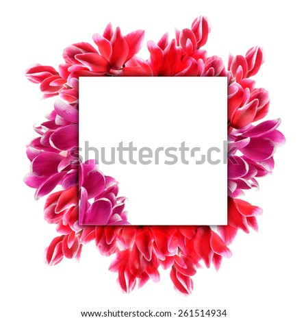 Beautiful cyclamen with empty greeting card isolated on white - stock photo