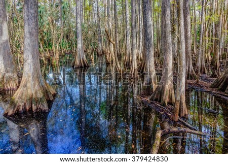 Beautiful cypress trees reflect in water of the Everglades - stock photo