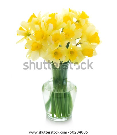 Beautiful Daffodils in a vase - stock photo