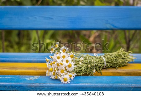 Beautiful Daisies on the bench, background - stock photo