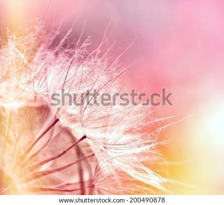 Beautiful dandelion seeds - dandelion - stock photo