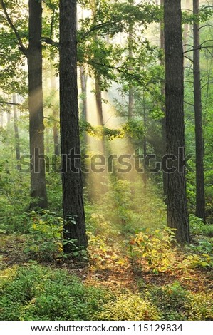 Beautiful dawn in autumnal forest - stock photo