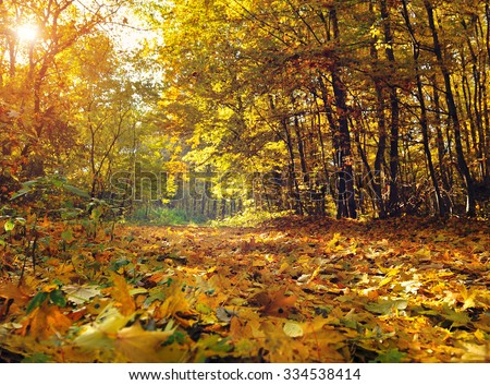 Beautiful day in the autumn forest with sun rays