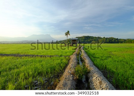 Beautiful day with old hut in the middle paddy field at background in Kota Belud, Sabah, East Malaysia, Borneo.
