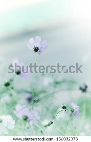 Beautiful defocus blur pastel background with tender flowers. Floral art design - stock photo